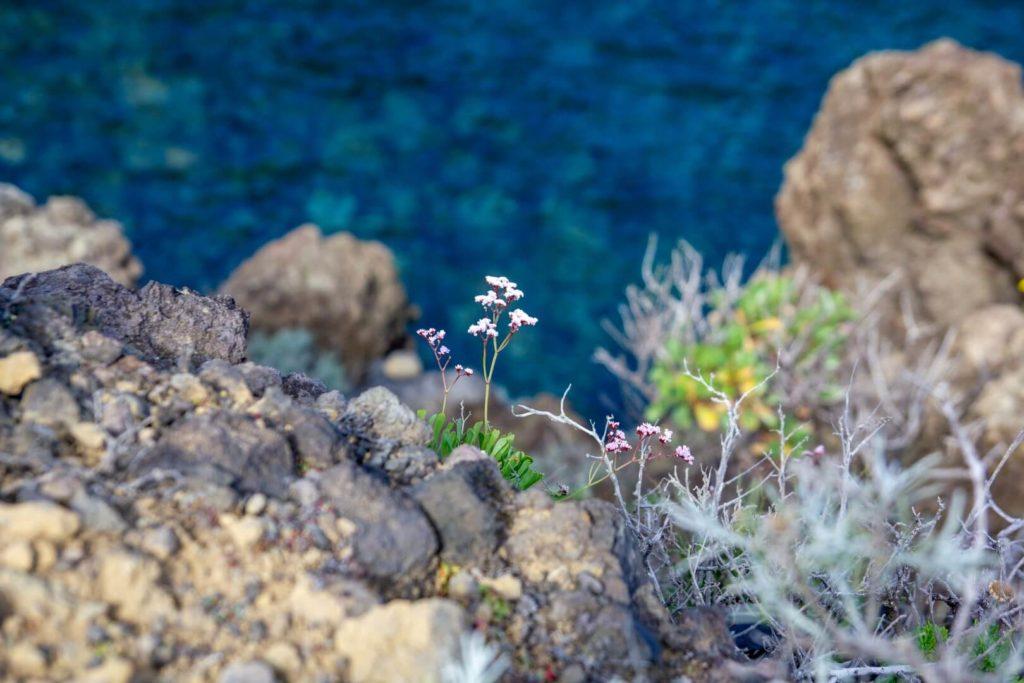 La Palma - view on a flower